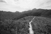 Mt Anne Track