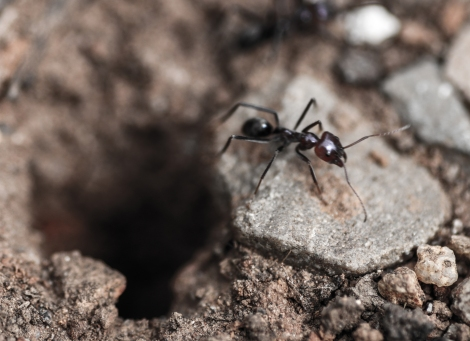 Ant and hole