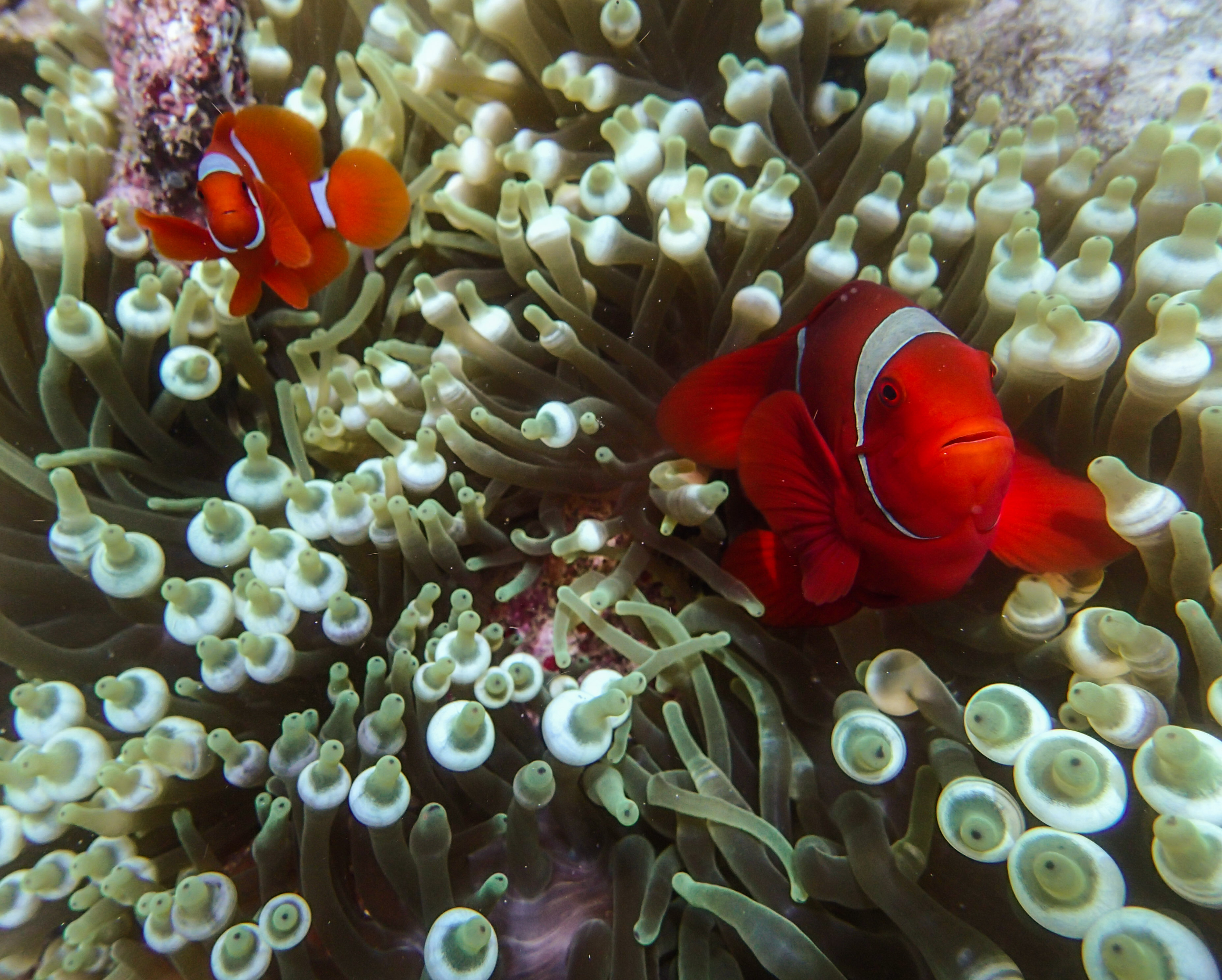The underwater world of the four kings – diving West Papua\'s Raja ...